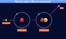 Het neutron vangt Neutronenabsorptie Stock Afbeelding