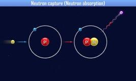 Het neutron vangt Neutronenabsorptie Royalty-vrije Stock Foto