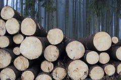 Het nevelige bos deforested Royalty-vrije Stock Afbeeldingen