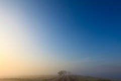 Het nevelige landschap van de de aardweide van de dageraad vroege ochtend Stock Foto's