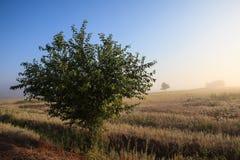Het nevelige landschap van de de aardweide van de dageraad vroege ochtend Stock Afbeelding