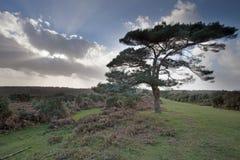 Het Nieuwe Bos Stock Fotografie