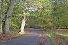Het Nieuwe Bos Stock Afbeeldingen