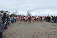 Het nieuwe jaren traditionele zwemmen op fisrtjanuari Stock Fotografie