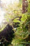 Het nieuwe leven, bladeren en gebladerte Royalty-vrije Stock Foto