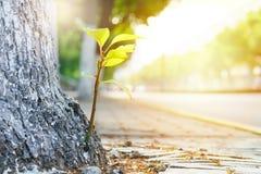 Het nieuwe nieuwe leven, - de geboren groene verlofgroei op de oude boom, de zomerconcept stock fotografie