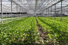 Het nieuwe planten Stock Afbeelding