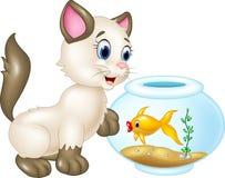 Het nieuwsgierige kat spelen met zwemmende vissen op witte achtergrond Royalty-vrije Stock Fotografie