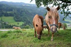 Het nieuwsgierige paard Royalty-vrije Stock Foto