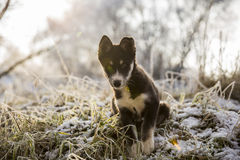 Het nieuwsgierige puppy zet op het bevroren gras Royalty-vrije Stock Afbeelding