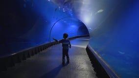 Het nieuwsgierige toeristenjonge geitje in aquariumtunnel bekijkt admiringly verschillende vissen die in water zwemmen stock video