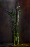Het nog-leven met bamboe Royalty-vrije Stock Afbeelding