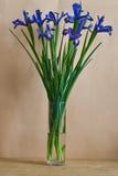 Het nog-leven met blauwe irissen Royalty-vrije Stock Foto