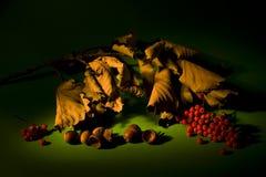 Het nog-leven van de herfst stock fotografie