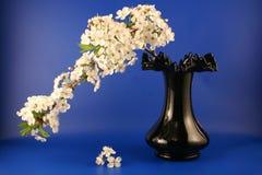 Het nog-leven van de lente Stock Afbeeldingen