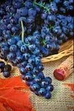 Het nog-leven van druiven Stock Foto