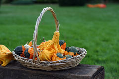 Het nog-leven van pompoenen met natuurlijke achtergrond Stock Foto