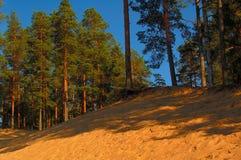 Het noordelijke bos Stock Foto