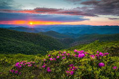 Het noorden Carolina Blue Ridge Parkway Spring bloeit Toneelberg stock fotografie