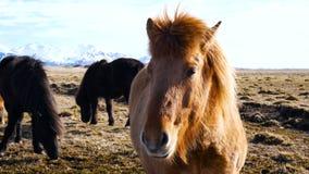 Het noorden van het paardendorp stock footage