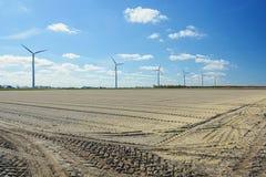Het noorden van tulpengebieden van de provincie van Nederland stock foto's