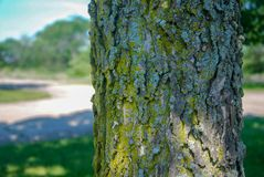Het noordenkant van een oude boom met mossen en korstmossen royalty-vrije stock fotografie