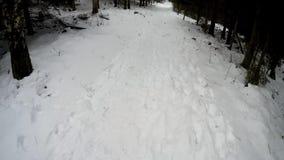 Het noordse Lopen in diep de winterbos met camera op mijn hoofd stock videobeelden