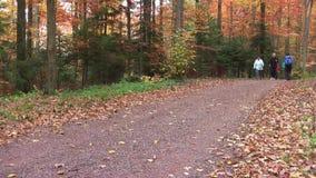 Het noordse valking De herfst van 2018 Een groep vrouwen loopt in het hout stock footage