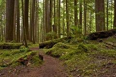 Het Noordwestenregenwoud van de V.S. stock afbeeldingen