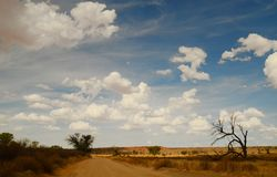 Het Nossob-rivierbed in het Grensoverschrijdende Nationale Park van Kgalagadi, Zuid-Afrika Stock Afbeelding