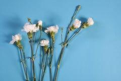 Het notitieboekje op de lentes met een wit nam op een blauwe achtergrond met een lege ruimte voor nota's toe Royalty-vrije Stock Afbeelding