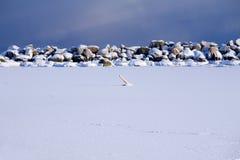 Het oceaan bevriezen aan ijs tijdens koude winter.GN royalty-vrije stock afbeelding