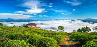 Het ochtendlandschap op de geplante helling van thee royalty-vrije stock foto