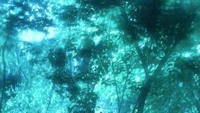 Het ochtendlicht, de bomen schudt de luifel van de versheid van blauwe dromen stock footage
