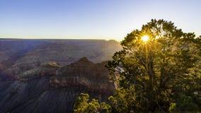 Het ochtendzonlicht achter de boom op Mather-meningspunt, Grand kan royalty-vrije stock foto