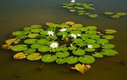 Het Ogenblik van Zen royalty-vrije stock fotografie