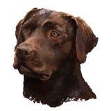 Het olieverfschilderij van Labrador royalty-vrije stock afbeelding