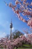 Het Olympische Park van München Royalty-vrije Stock Afbeeldingen