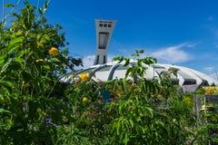 Het Olympische Stadion van Montreal zoals die van achter lange bomen en bloemen wordt gezien stock afbeelding