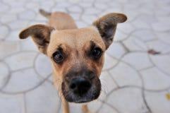 Het omhoog-Sluiten van de Neus van de nieuwsgierige Hond Royalty-vrije Stock Afbeelding