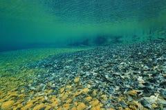 Het onderwater duidelijke water van het rivierbed en dode bladeren Stock Afbeeldingen