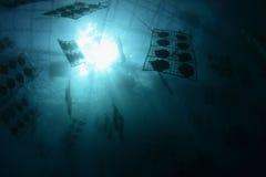 Het onderwater landbouwbedrijf van het pareltweekleppige schelpdier Stock Afbeeldingen