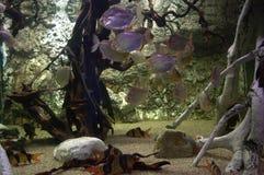 Het onderwater leven Royalty-vrije Stock Afbeeldingen