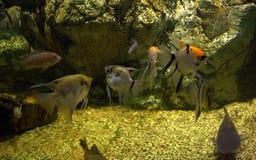 Het onderwater leven Stock Afbeeldingen