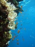 Het onderwater leven Royalty-vrije Stock Afbeelding