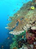 Het onderwater leven Stock Afbeelding