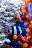Het onderwater leven Stock Foto