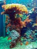 Het onderwater leven Royalty-vrije Stock Foto's