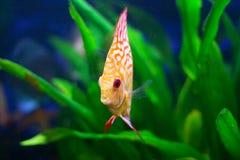 Het onderwater leven Stock Foto's