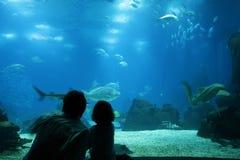 Het onderwater leven bij aquarium Royalty-vrije Stock Foto